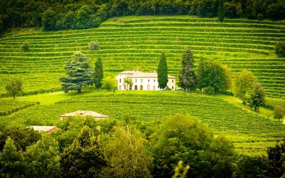 Walking the Prosecco Hills